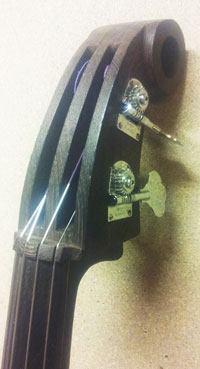 The head of a bass by Jos Noorhoff.